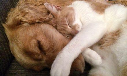 Miracolele din viaţa noastră: animalele de companie