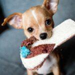 Accesorii de care ai nevoie înainte de a aduce acasă un animal de companie