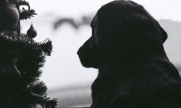 Cât timp îți poți lăsa animalul de companie singur acasă?