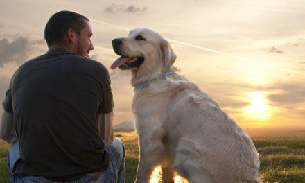 La ce este bun un câine?