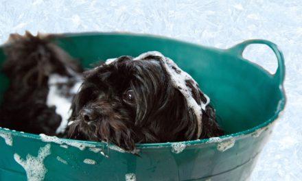 10 tips-uri utile pentru proprietarii de câini