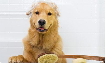 Sfaturi de toaletare a câinilor