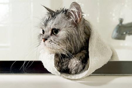 Sfaturi de toaletare a pisicilor