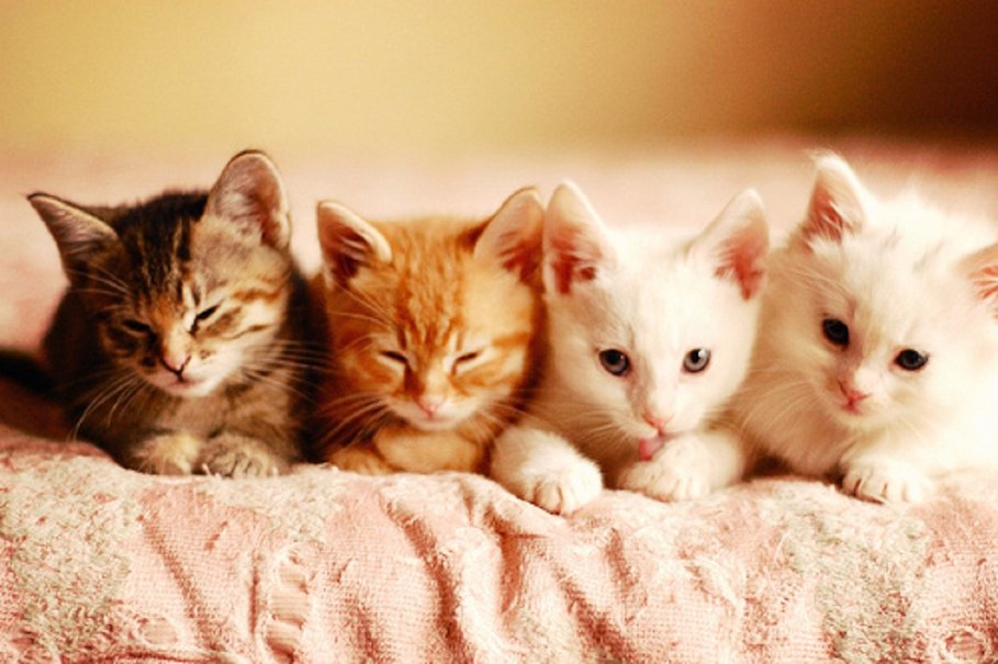 Ghidul creșterii pisicilor