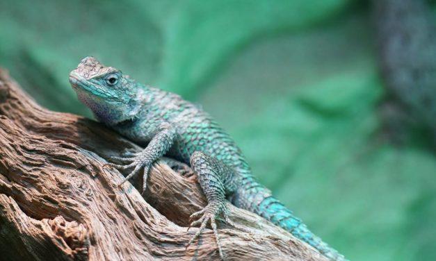 Câteva sfaturi pentru iubitorii de reptile