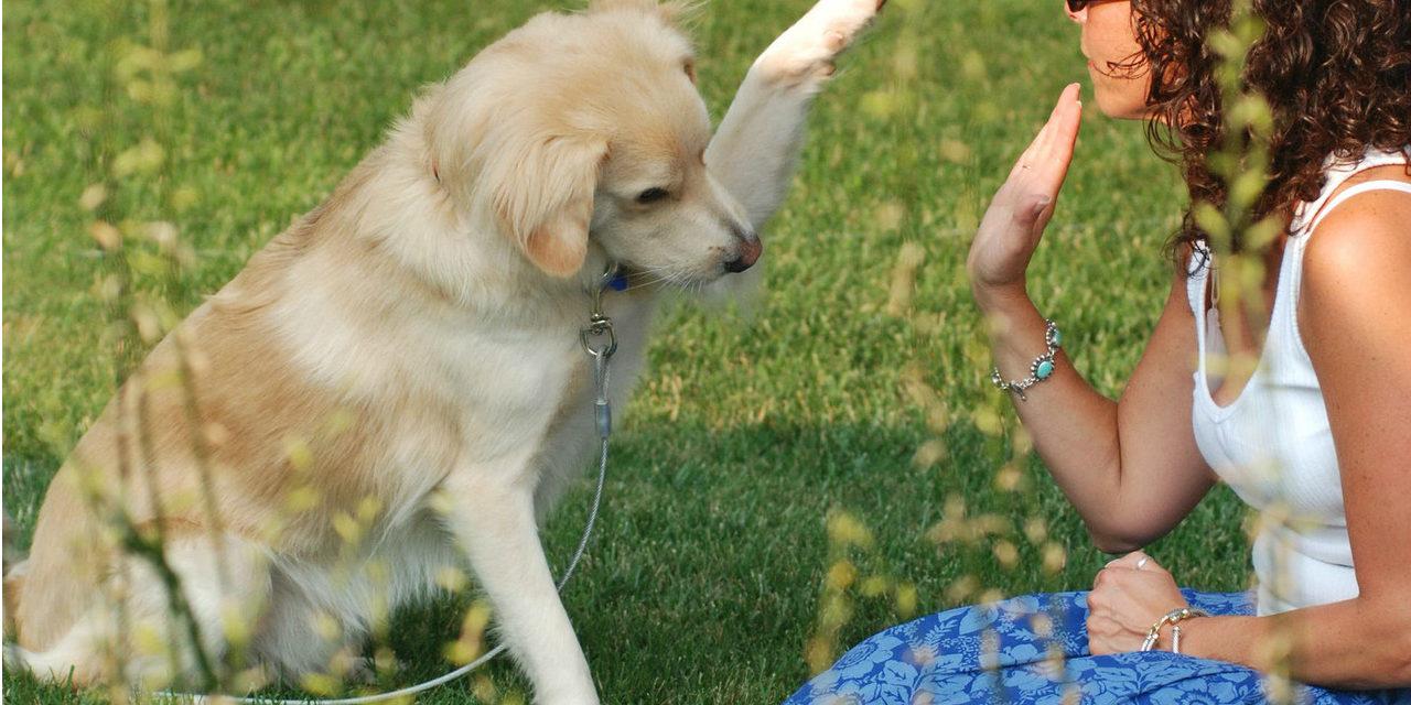 Dresajul câinelui : simplu și distractiv