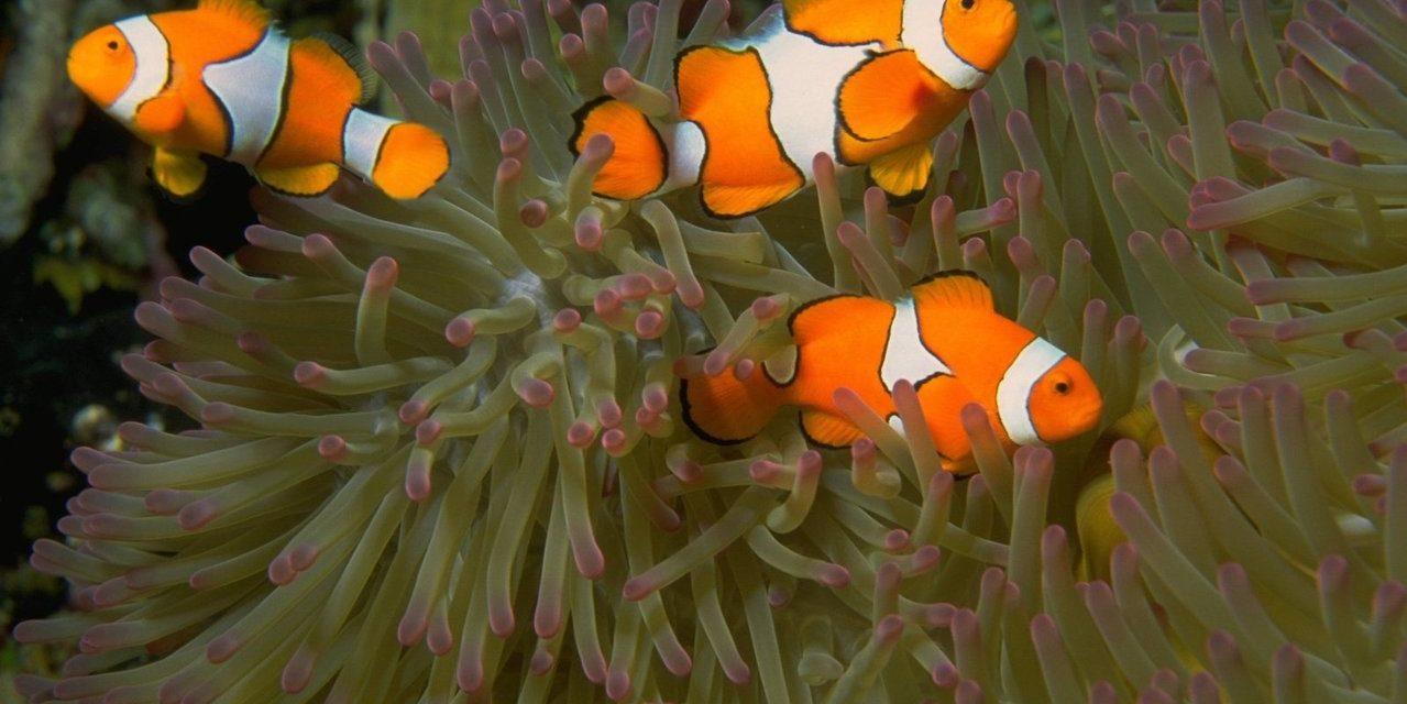 Peștii exotici ca animale de companie