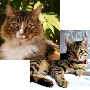 pisici-de-apartament