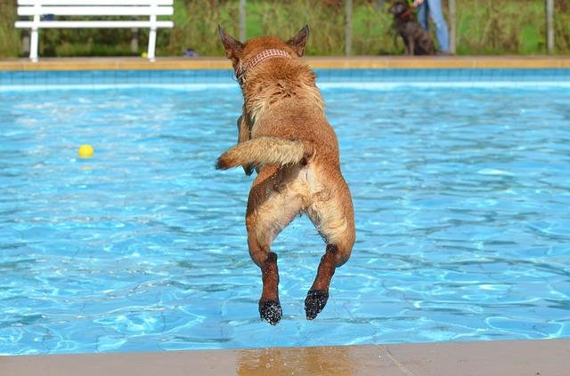 vara la piscina