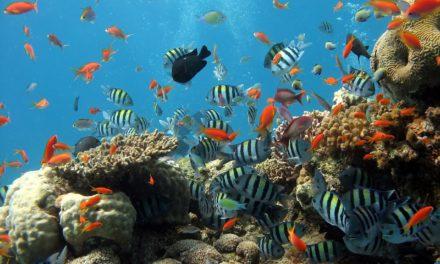 Câteva motive pentru care să îți achiziționezi un acvariu cu pești