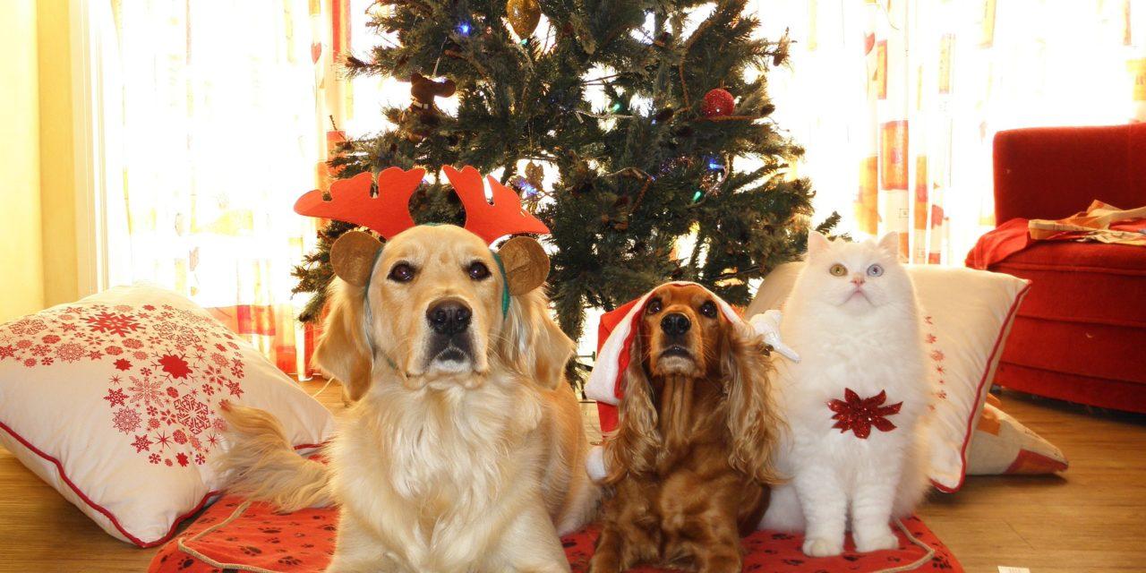 Crăciunul și animalele de companie