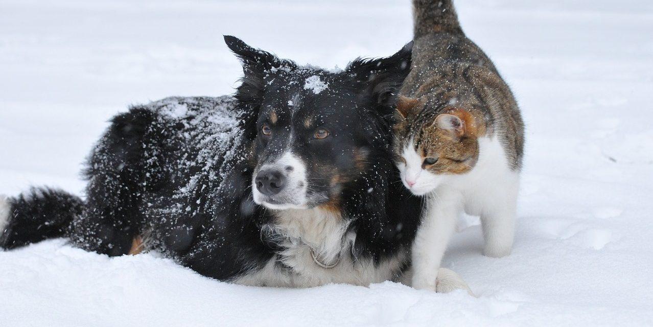 Cum să îți protejezi companionul in anotimpul rece (partea 1)