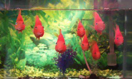 Îngrijirea acvariului în 10 paşi simpli