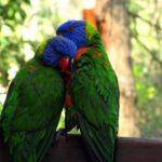 Eşti pregătit să ai o pasăre ca animal de companie?