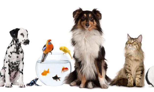 Topul celor mai răspândite animale de companie