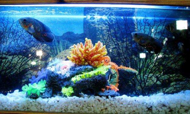 Ghid de îngrijire a peştilor din acvariu