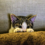 Ce nu trebuie să mănânce pisica