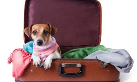 Ghid de călătorie cu animalele de companie