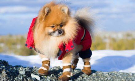 Cum să îngrijeşti lăbuţele câinelui pe timp de iarnă
