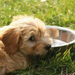 Este bine sa hranim cainii cu lapte?