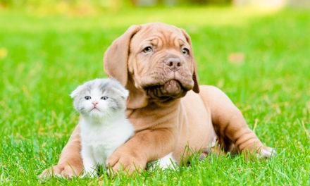 Deparazitarea corectă la câini şi pisici
