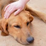 Primul ajutor în cazul otrăvirii la câine