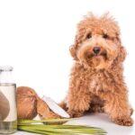 Moduri în care uleiul de cocos îţi ajută animalul de companie