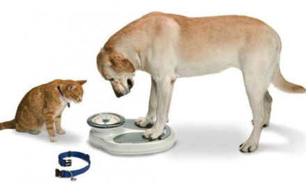 Obezitatea la animalele de companie