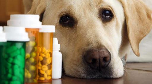 Cele mai toxice medicamente pentru animalele de companie