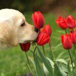 79 de plante toxice pentru animalele de companie