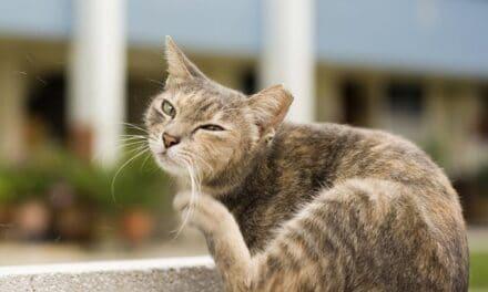 Deparazitarea la pisici