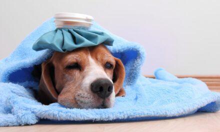 Deparazitarea la câini