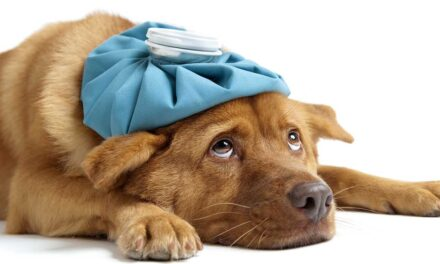 Parvoviroza la câini